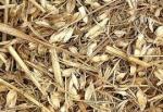 Wheat Chaff