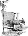 Donkey Running