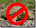snapping turtle forbidden
