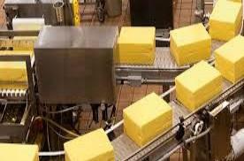 milk cow 4 cheese